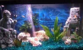 Live Plants In Community Aquariums by Using Driftwood And Live Plants In The Freshwater Tank