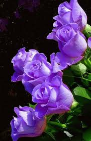 840 best la vie en rose images on pinterest flowers beautiful