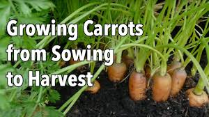 Gardening For Beginners Vegetables by Fall Vegetable Gardening For Beginners Best Ideas On Pinterest