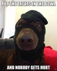 Chocolate Lab Meme - dog meme free large images