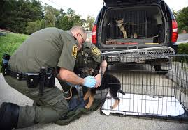 dogs including several suspected wolf dogs seized from