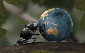 beetle rolled globe wallpapers and images wallpapers pictures