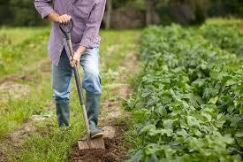 10 expert gardening tips for beginners u2013 pine dove farm