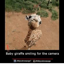 Meme Giraffe - baby giraffe smiling for the camera didyouknowpagel meme on me me