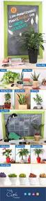 10 easy care plants for 10 best plants of steel images on pinterest a well bathroom