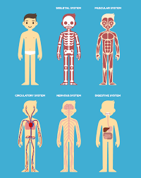 Anatomy Structure Of Human Body How Your Body Systems Are Connected Revere Health Live Better