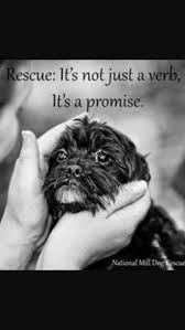 affenpinscher monkey dog 469 best be kind to animals images on pinterest animal quotes
