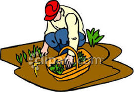 growing vegetables clipart clipartxtras