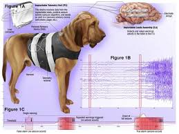 What Causes Dogs To Go Blind What Causes Seizures In Dogs What You Can Do