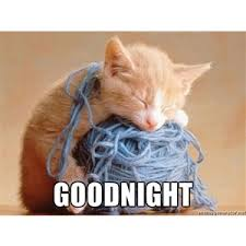 Kitty Meme Generator - wooly kitty goodnight meme generator polyvore goodnight pics