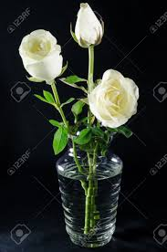 white roses in glass vase on black background stock photo picture