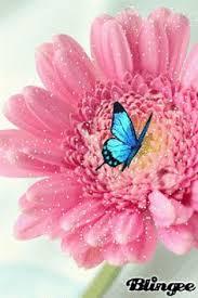 pin by greg roscoe on butterfly moths butterfly