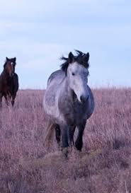 mustang adoption adopt a expert advice on care and