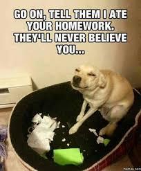 Go On Meme - go on tell them dog meme
