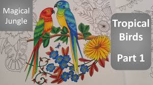magical jungle color along of the tropical birds part 1