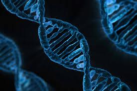 biomedical science bsc hons canterbury the university of kent