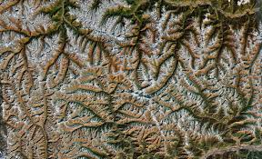 fractal pattern in nature google earth fractals
