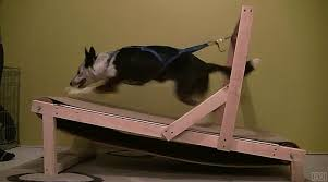 Treadmill Meme - homemade dog treadmill gif on imgur