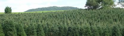 mountain advantage christmas trees welcome