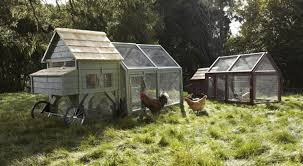 chicken coop design a new chicken coop design from american