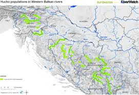 Europe Rivers Map by Studies Save The Blue Heart Of Europe