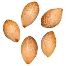 areca palm seeds palm tree seeds