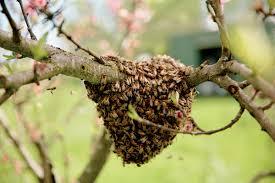 how to keep honeybees modern farmer