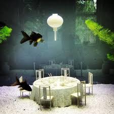 15 best fishes aquariums images on fish tanks fish