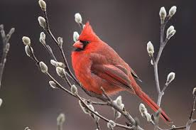 Audubon Backyard Bird Count by Great Backyard Bird Count Returns Feb 17 20 Blowing Rocket