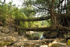 kamere inspiration matters extraordinary living bridges are
