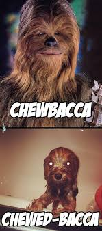 Chewbacca Memes - meme center skullleaderwolfx likes page 8003
