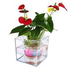 Indoor Plant For Office Desk Indoor Water Plants Amazon Com