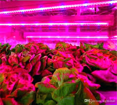 plant grow lights lowes best plant growing lights led grow light full spectrum for indoor