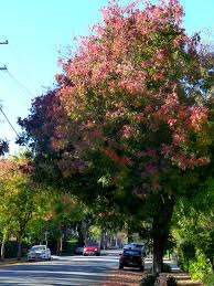 fall into color canopy canopy