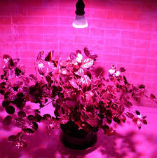 hydroponic led grow lights 6 x e27 red and blue 60 led 3w hydroponic led plant grow l led