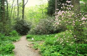 native plants in massachusetts garden in the woods wikipedia