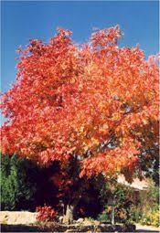 teki 25 den fazla en iyi pistachio tree fikri ağaçlar