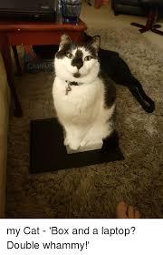 Cat Laptop Meme - craniu laptop meme on me me