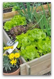 beginner vegetable garden free plans pictures and worksheets