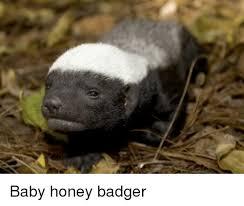 Badger Memes - 25 best memes about honey badger honey badger memes