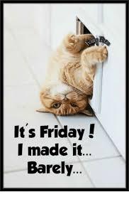 Its Friday Funny Meme - 50 funny friday memes hilarious tgif memes love memes