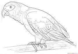 coloring pages parrot drawing parrot drawings kids u201a parrot