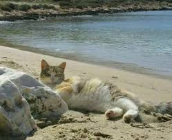 Kentucky traveling with cats images 125 best on the beach images on the beach jpg