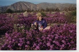 anza borrego wildflowers hike anza borrego desert state park john mckinney