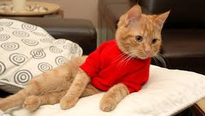sweaters for cats 25 photos of pets in sweaters to you all warm and fuzzy mnn