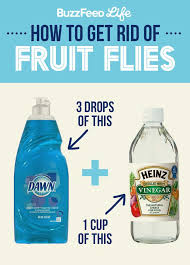 fruit flies in sink 1139 best fruit fly removal images on pinterest fruit flies ant