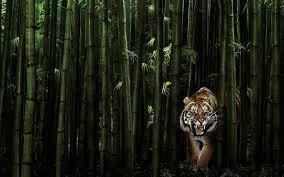 tiger in jungle wallpaper 30994