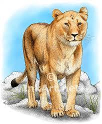 african lioness stock art illustration