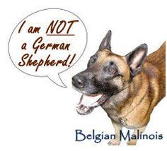 belgian malinois near me belgian malinois breed jewelry face pendant jewelry pendants