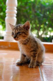 free picture cat cute portrait animal outdoor kitten young